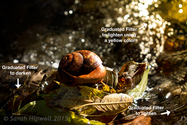 Snail with Graduated Filter effects