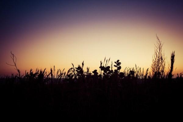siesta_silhouette