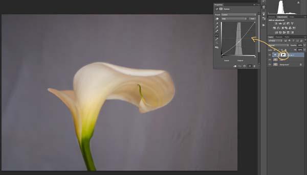3-lily-texture-original