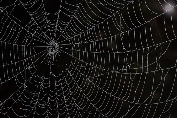 5_spiderweb