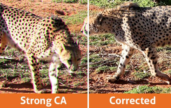 Cheetah Chromatic Aberration Comparison