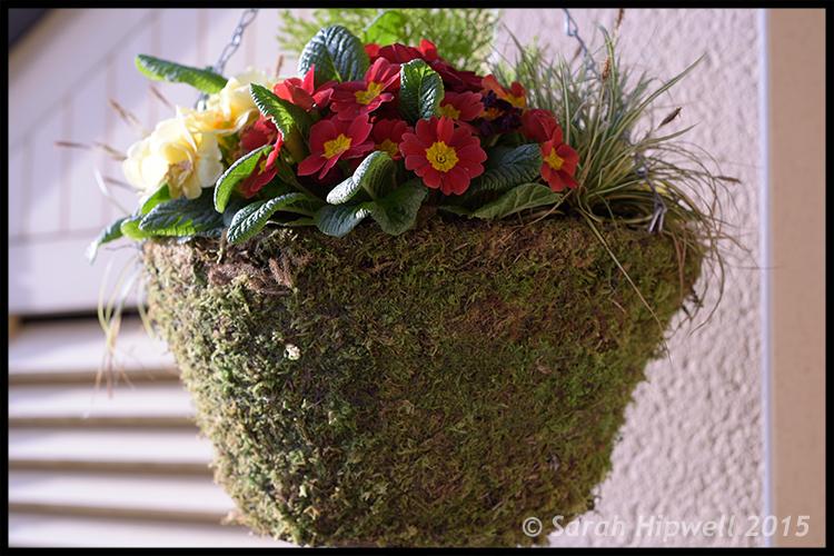 hanging-basket-flowers