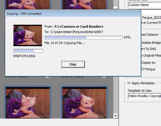 import-photos-using-bridge-9