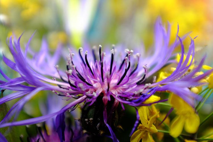 Fuj Flowers