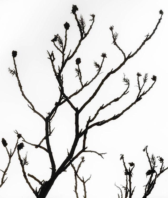 BobbyBaker Winter Tree