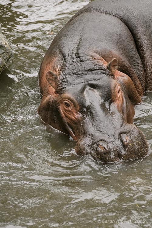 Hippo-correct-exposure
