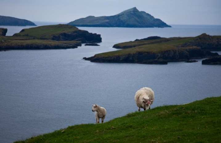 Seascape example - Valencia Island with Sheep