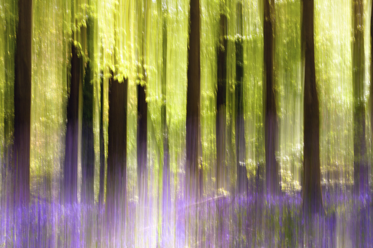 intentional camera movement in bluebell woods