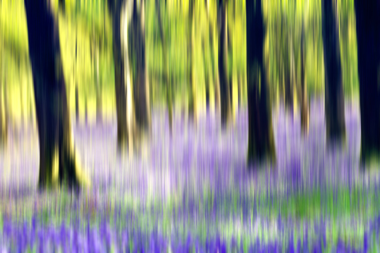 bluebell woods intentional camera movement