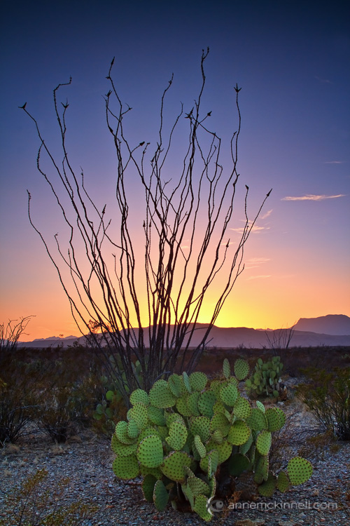 Big Bend National Park , Texas, by Anne McKinnell