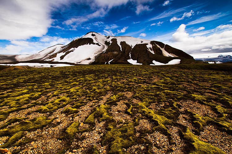 Moss in Iceland takes decades to grow but moments to permanently destroy.