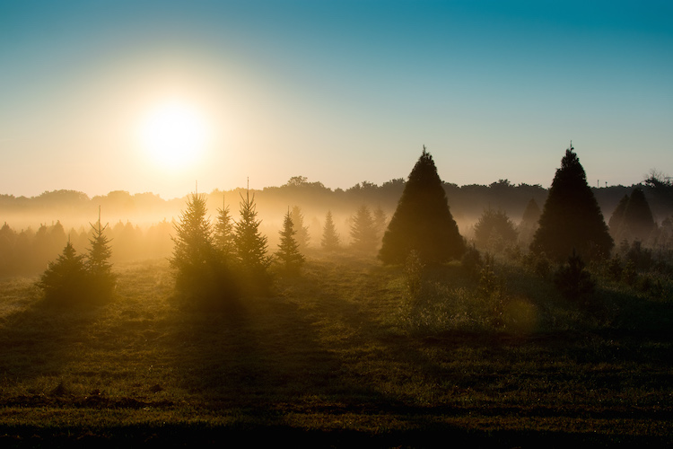 what-is-exposure-trees-sunrise