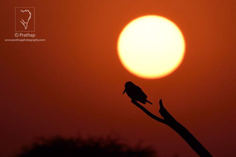 01-The-Most-Useful-Bird-Photography-Tips-for-Beginners-by-Prathap-Nature-Photography-Simplified
