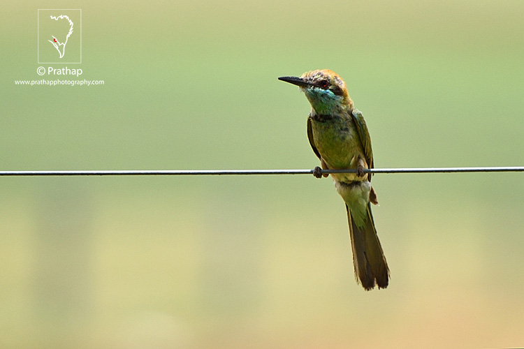 18-The-Most-Useful-Bird-Photography-Tips-for-Beginners-by-Prathap-Nature-Photography-Simplified