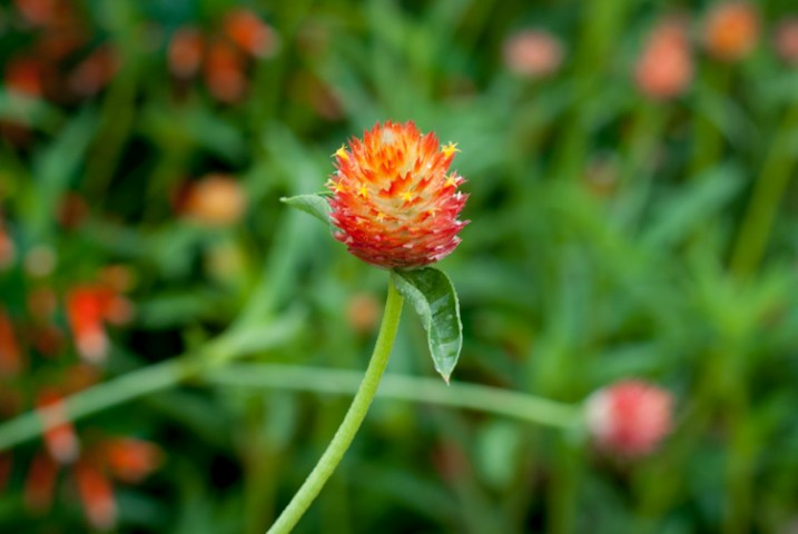 3-tips-flower-photos-dof-wide