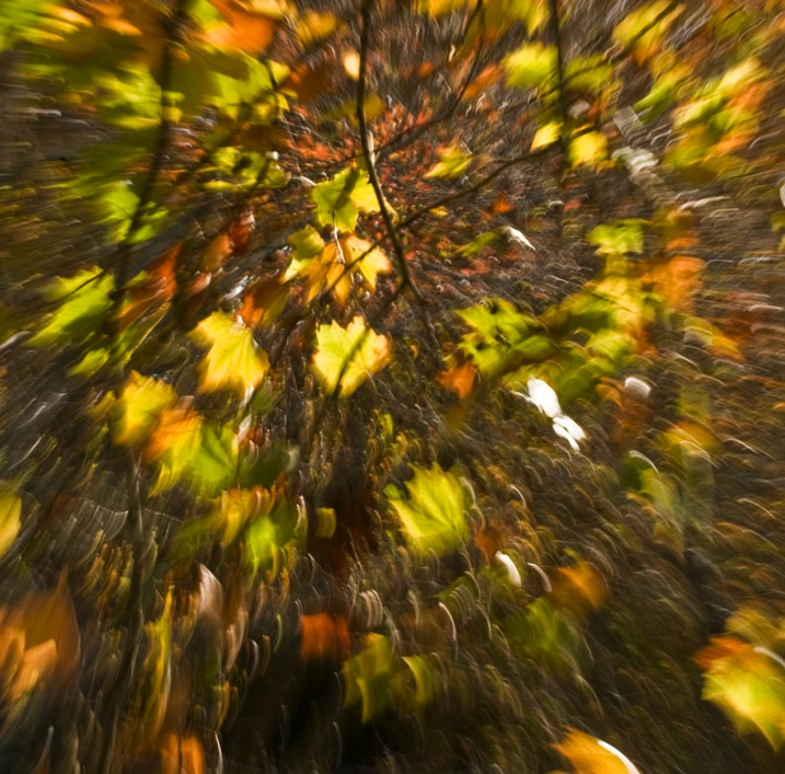 5 Zoom Autumn Leaves by Eva Polak