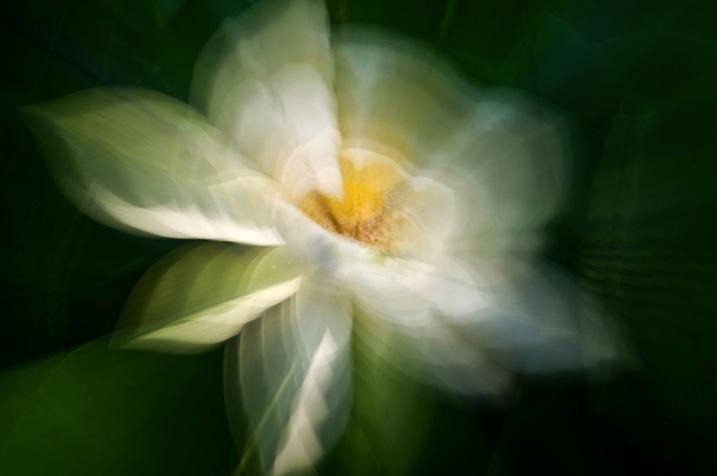 5 Zoom Water lily by Eva polak