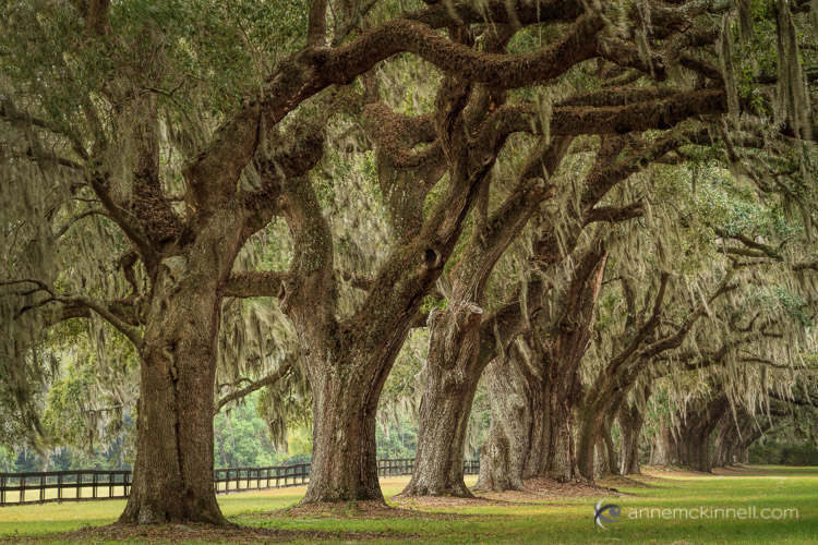 Boone Hall Plantation, South Carolina