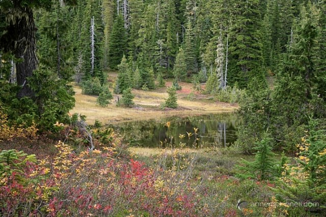 Paradise Meadows by Anne McKinnell