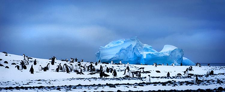 Penguins and iceberg in Antarctica.