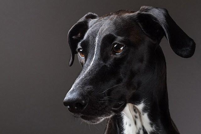 pet-photography-to-improve-camera-skills-0795