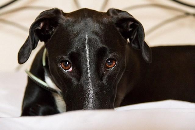 pet-photography-to-improve-camera-skills-8431