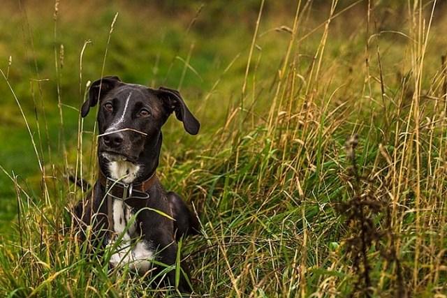 pet-photography-to-improve-camera-skills-9944