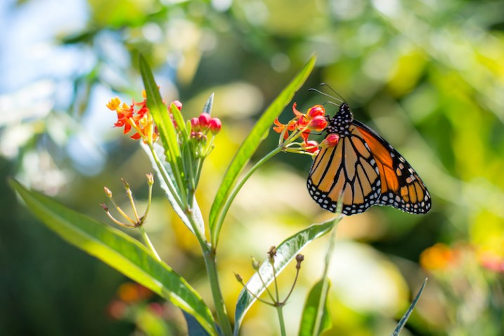 use-your-new-camera-butterfly