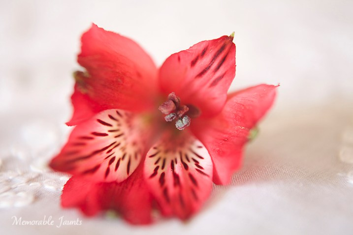 Memorable Jaunts Macro Photography Article for DPS 05