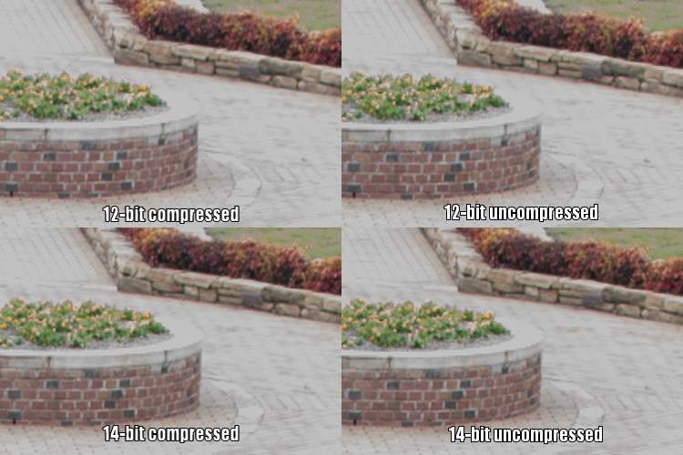 raw-formats-compared-garden-overexpoure-fixed-compared-crop