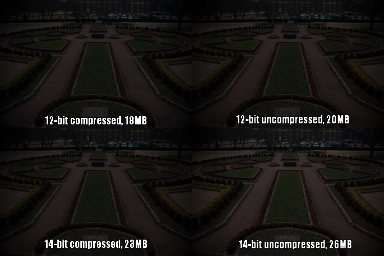 raw-formats-compared-garden-underexposure-compared