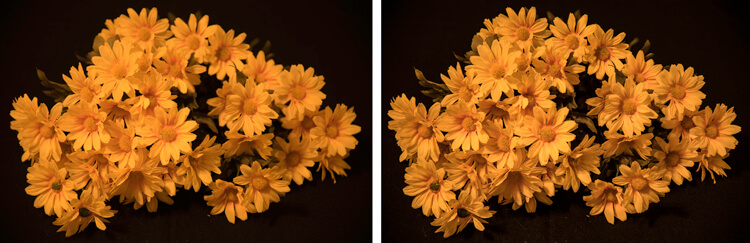 Image on right is a single image capture at 85mm focal length. Image on right is a 12 image focus stacked image. Each image had a DOF of less than one inch.