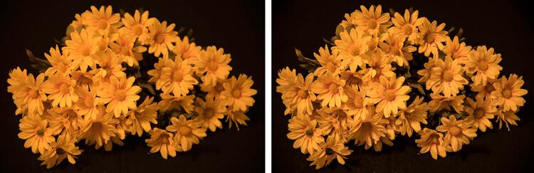 A imagem à direita é uma captura de imagem única com uma distância focal de 85 mm. A imagem à direita é uma imagem empilhada com 12 imagens em foco. Cada imagem tinha um DOF de menos de uma polegada.