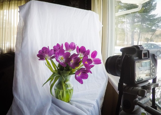 light catching backdrop for natural light photography