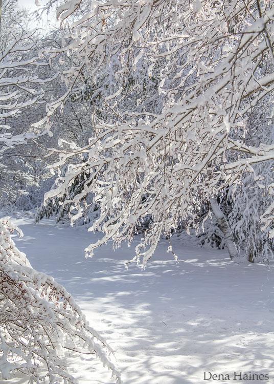 Fotografando a neve: um guia para iniciantes