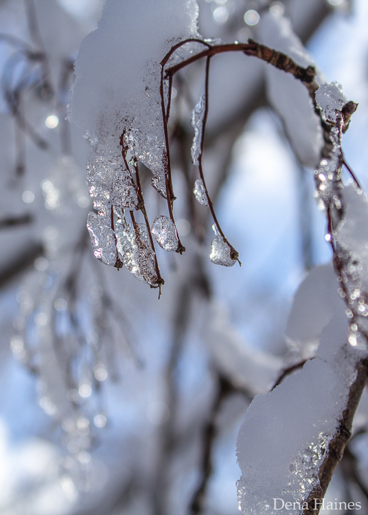 dicas de fotografia para iniciantes na neve