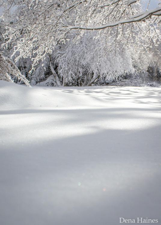 dicas de fotografia de neve