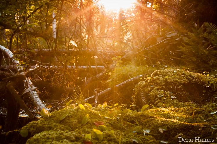 How to Photograph Sun Flares: 14 Tips for Beginners