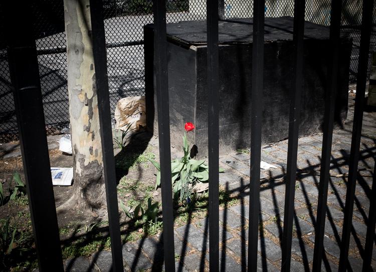 Flower, East Village.