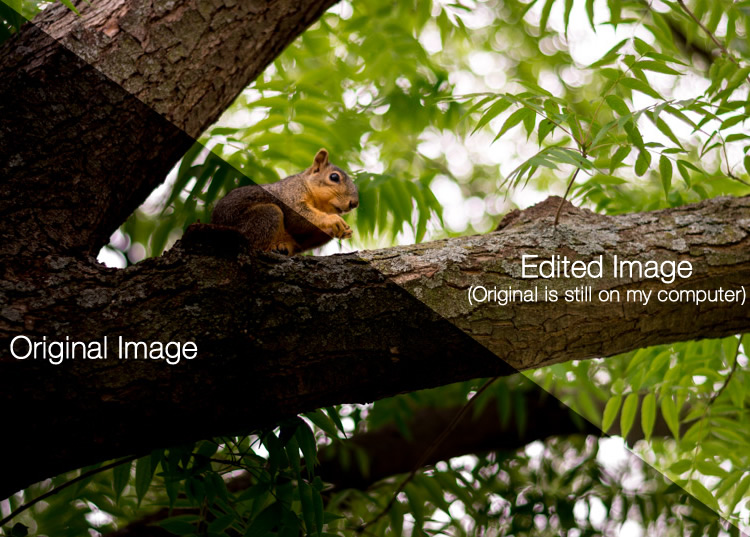 beginners-guide-lightroom-squirrel-comparison