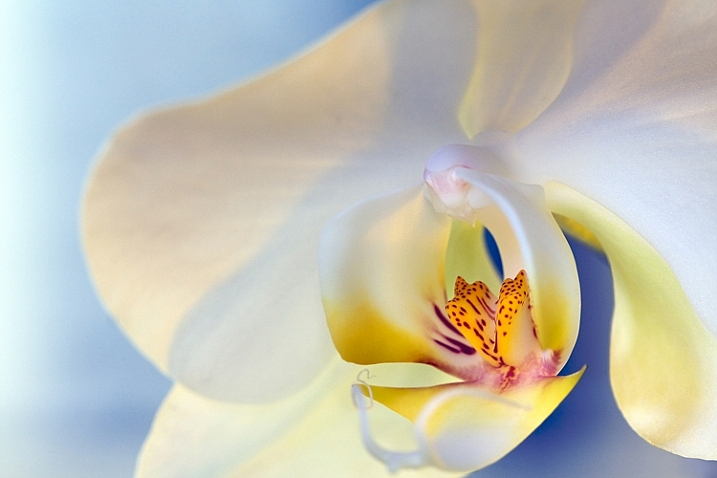 1-Light-painting-flowers-orchid