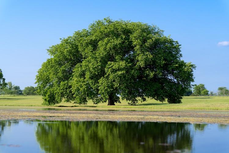 bracketing-exposure-tree
