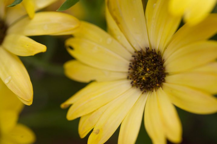 How to use a reflector and diffuser to enhance flower photographs now you can see how using a reflector and diffuser can drastically improve your flower photographs i also want to add that none of these photographs were mightylinksfo