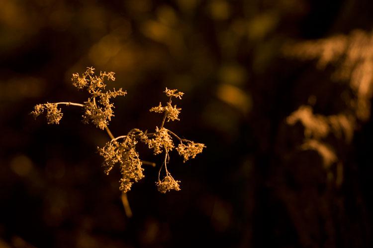 Illuminated plant at night