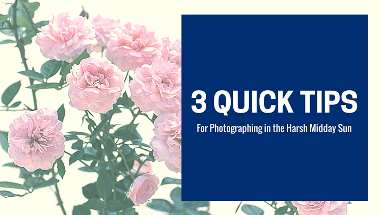 3 Quick Tips for Photographing in Harsh Midday Sun(1)