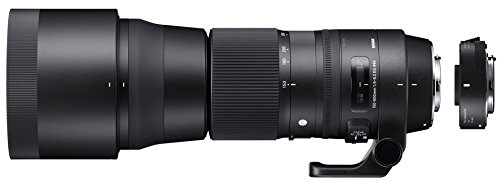 Review of the Sigma 150-600mm Contemporary Lens Plus TC-1401