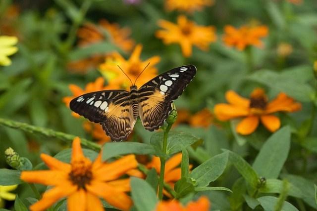 how-to-photograph-butterflies3