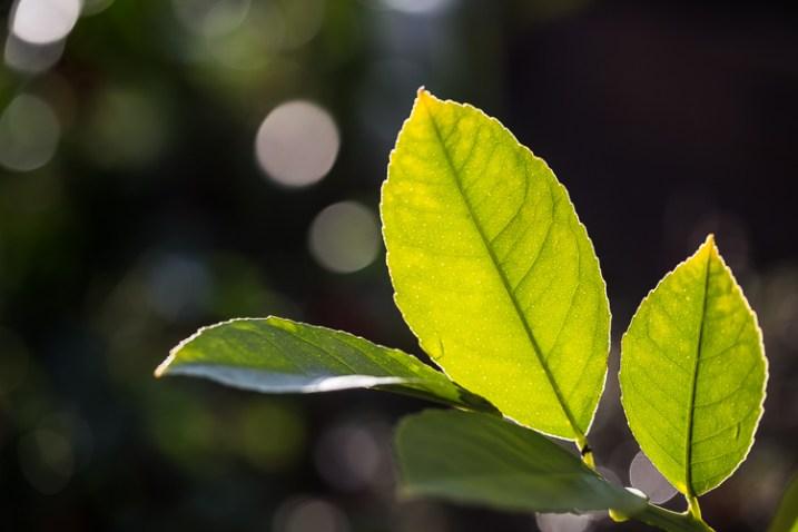 fotografando a natureza na folha iluminada do seu quintal