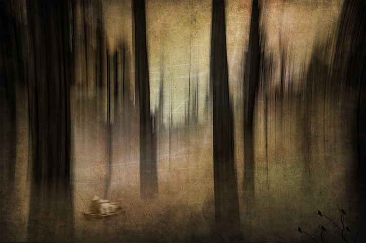 ICM_forest_creative_edit
