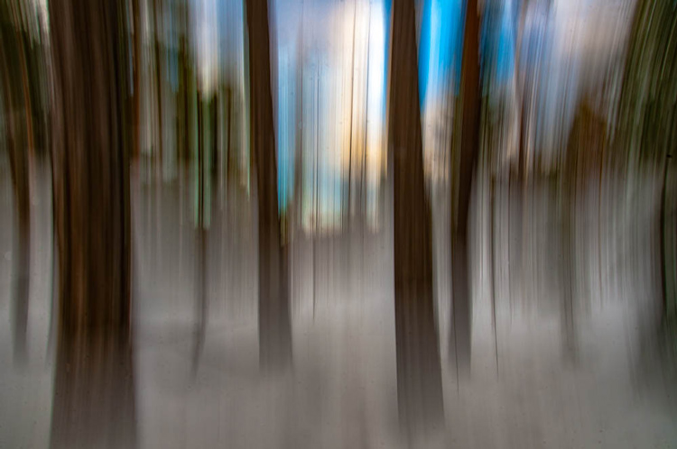 ICM_forest_original_edit